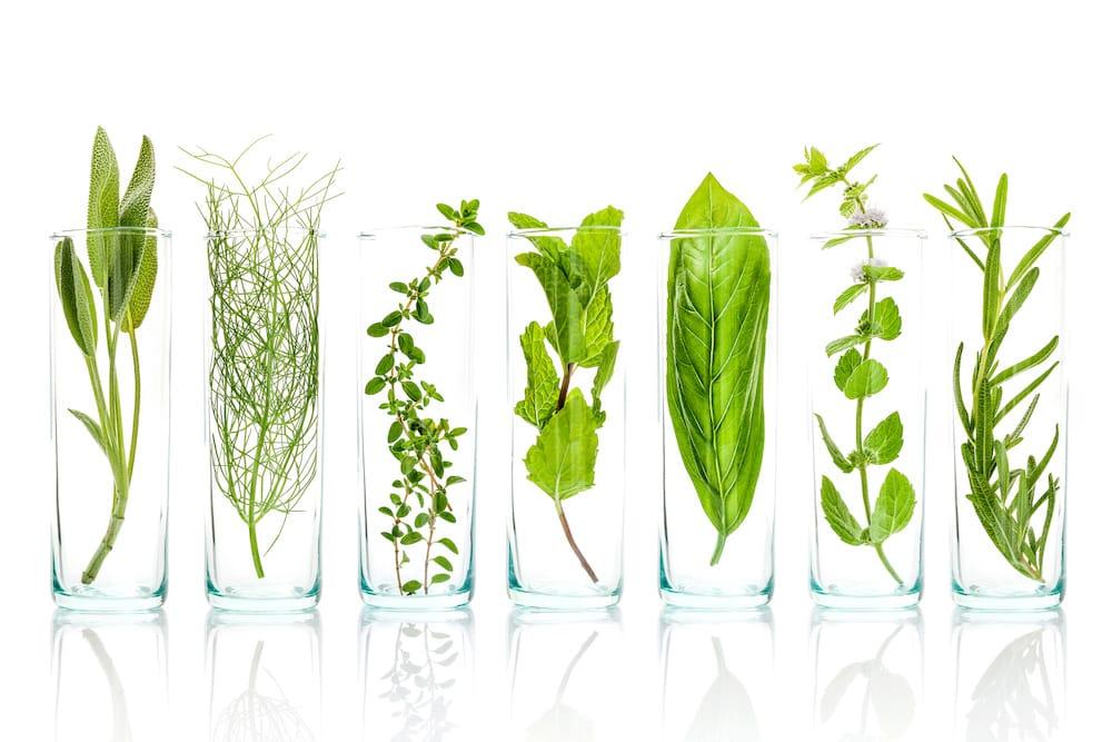 Pflanzenheilkunde / Phytotherapie